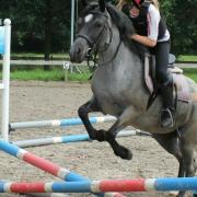Bijrijd/verzorg paard of pony gezocht