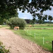Pensionplek op paddock paradise Klarenbeek