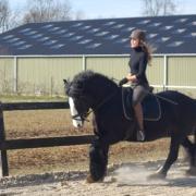 bijrijdpaard/ verzorgpaard gezocht omgeving Nijmegen
