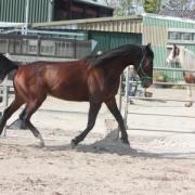 Weidegang met stal gezocht