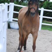 Stoere pony Storm