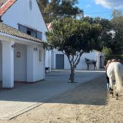 Instructrice / stalmedewerker / stage in Spanje