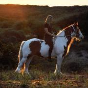 2 leuke pony's beschikbaar om te leasen - NOORDWIJK, ZH
