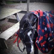 gezocht tweewieler - voor A-pony
