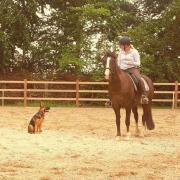 Lieve gevoelige e pony ruin
