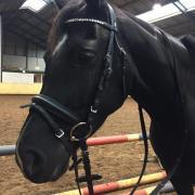Pony hoofdstel