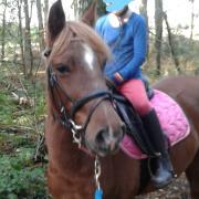 B pony