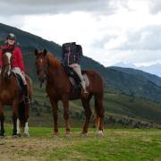 Bijrij/lease paard gezocht / bijrijdster aangeboden