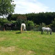 Ter lease: pony