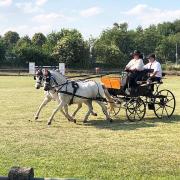 Pony Presentatiewagen
