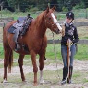Gez.: Verzorger Hierden - 2 paarden