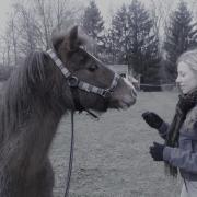 Bijrijder aangeboden / bijrijdpaard gezocht omg. Maastricht
