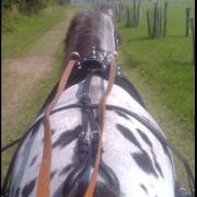 Beleren voor de wagen van minipaarden, shetlanders & pony's