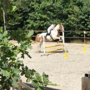 Gezocht verzoogpaad/pony omgeving arnhem nijmegen