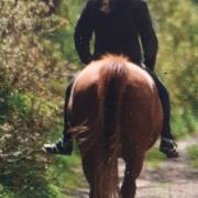 Gezocht paard voor heerlijke recreatieve bosritjes