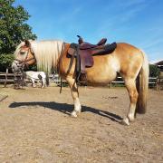 Verschillende pony's