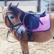 Harry's Horse vzh dekje