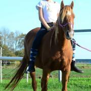 Ontzettende leuke, lieve, betrouwbare pony!