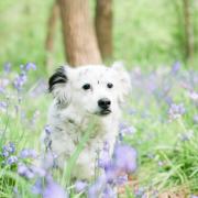 Wilde hyacinten shoot voor 25 euro