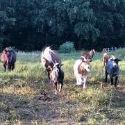 Gezocht: recreatie paard