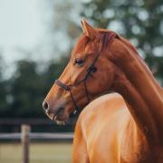 Gezocht: project paarden/pony's