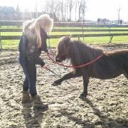 Gezocht hulp  met trainen van onze pony's (Welsh, NMPRS, etc