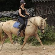 Leuke d-pony merrie
