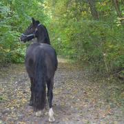 Verzorgster gezocht voor lieve, stevige e-pony