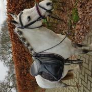 Kinderpony voor jong en oud. C pony! In prijs verlaagd