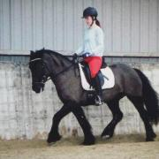 Mooie fell pony