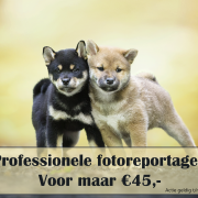 Professionele fotoreportage - ACTIE