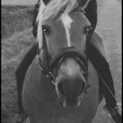 Liefdevol huisje recreatie paard/pony