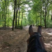 Met uw paard op vakantie naar de Veluwe