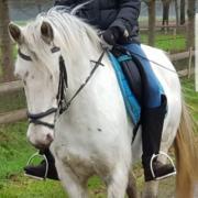 D pony