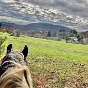 Toeristisch paardendomein in Frankrijk te koop