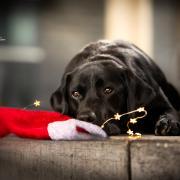Mini Kerstfotoshoots in Almere & Amersfoort!