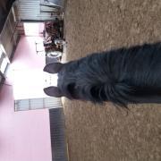 Leren paardrijden op een eigenaars paard (geen manege paard)