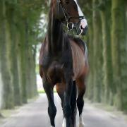 Braaf Paard