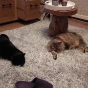 Goed thuis gezocht voor 2 leuke katten