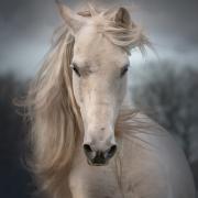 Workshops Paardenfotgrafie >> nieuwe datums!!