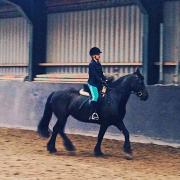 Verzorg-Lease Pony/Paard gezocht! Z-H