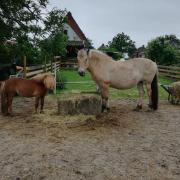 Twee lieve pony's