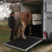 Paardentransport Brabant