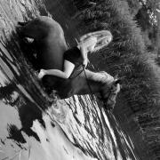 Bruikleen paard gezocht