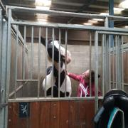 Bijrijdster aangeboden, verzorg-bijrijdpaard gezocht!