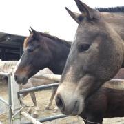 Recreatie pony gezocht.
