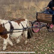 Enkelspantuig en concourswagen shet of a pony