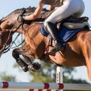 Lease/Bruikleen paard gezocht!