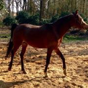 5* huisje gezocht voor paardje met verleden( ruin ) di gecas