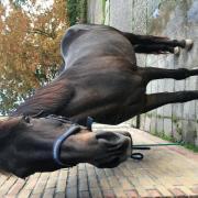 Brave E pony merrie